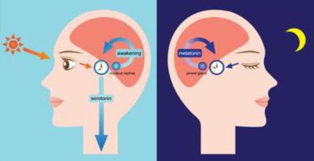 Modificarile ritmului circadian
